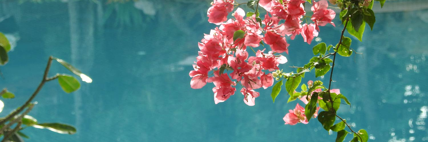Flowers over pool
